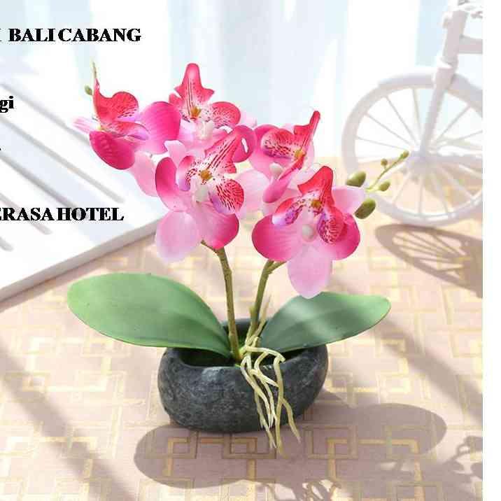 Download 8700 Gambar Bunga Orchid Terbaik